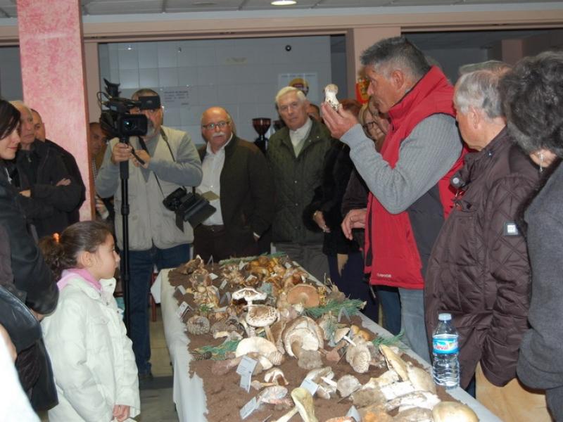 Las XIII Jornadas Micológicas de Cenes de la Vega consiguen reunir un centenar de variedades de setas de las provincias de Granada, Málaga y Cádiz